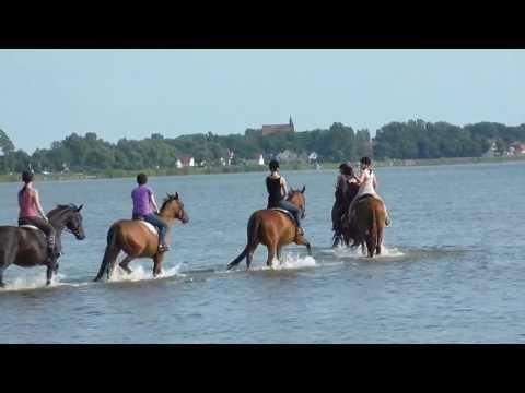 Rügen für Reiter: Boddenritt