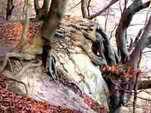Naturschauspiel im Jasmunder Nationalpark