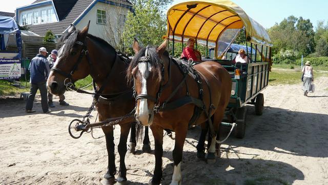 Segway fahren auf der Insel Rügen