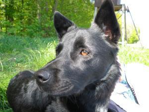 Ferienwohnungen in Binz auf Rügen mit Hund online buchen