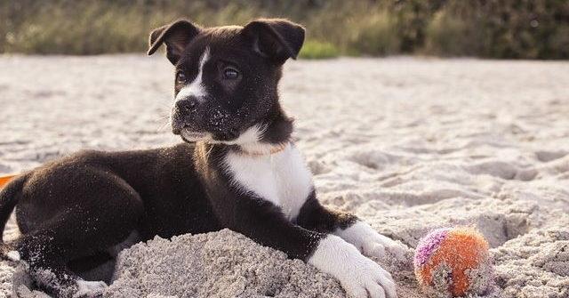 Urlaub mit Hund: Erholsame Auszeit für Mensch und Tier